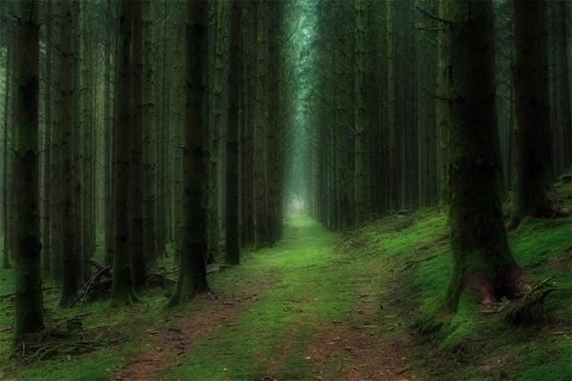 Fransa\'da ormanın derinlikleri