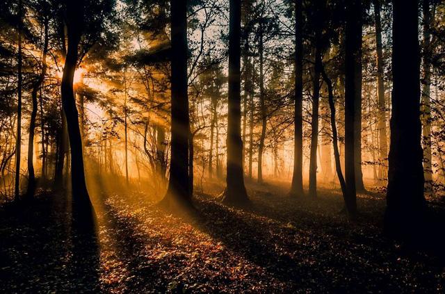 Slovenya Orman Fotoğrafı