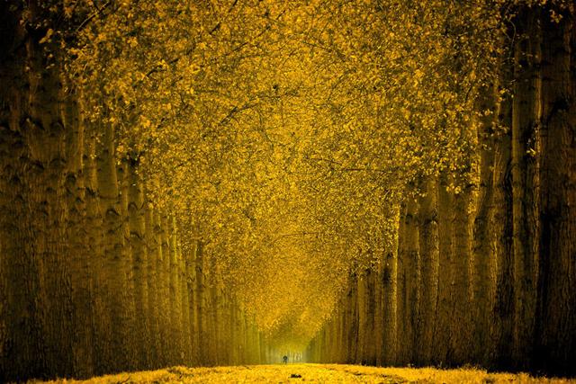 Muhteşem Sarı Orman