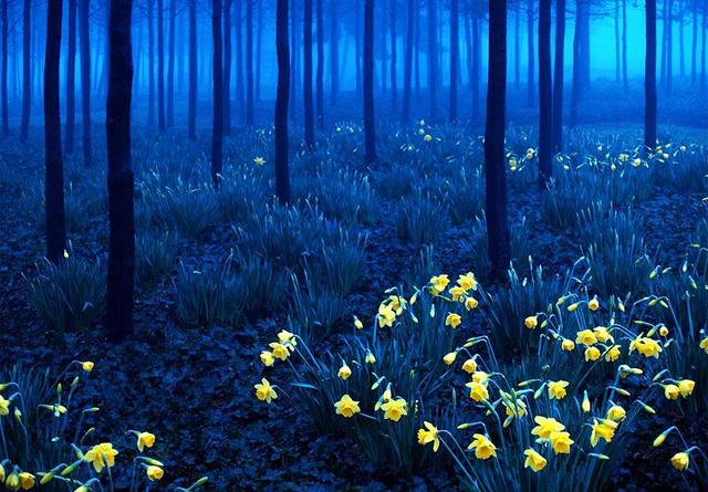 Almanya Kara Orman\'dan gece görüntüsü