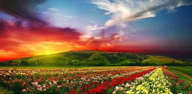 Çiçek Vadisi Milli Parkı - Hindistan