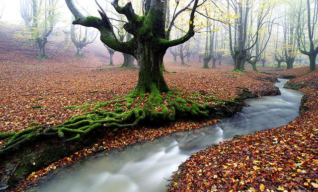 İspanya\'da yosun kaplı orman