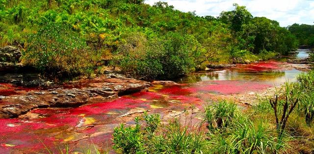 Cano Cristales Nehri - Kolombiya