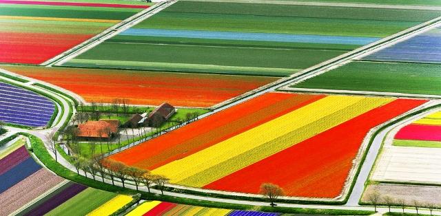 Lale Tarlası - Hollanda