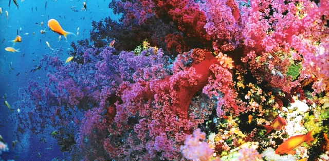 Büyük Set Resifi - Avustralya