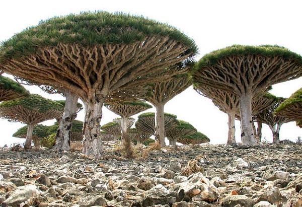 Sokotra - Yemen